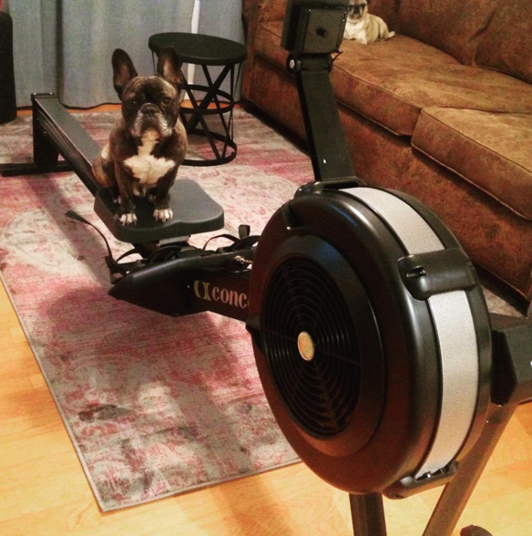 frenchie rower concept2